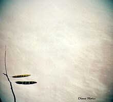 On The Wind / 6 by DianaMatisz