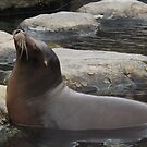 Seal, Central Park Zoo, New York City by lenspiro