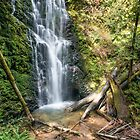 Berry Creek Falls, Big Basin Redwoods State Park by James Watkins