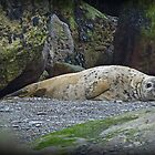 Sleepy Seal by Kat Simmons