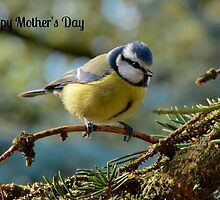 Blue Tit Mother's Day Card by Paula J James