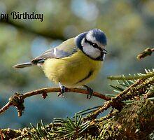 Blue Tit Birthday Card by Paula J James