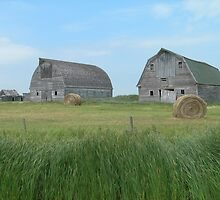 Old Barns by gurineb