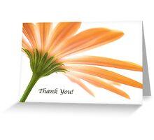 Osteospermum - Thank You! Greeting Card