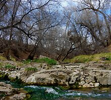 San Vicente Creek by Vicki Pelham