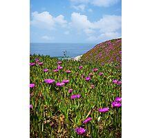 Springtime in Half Moon Bay Photographic Print