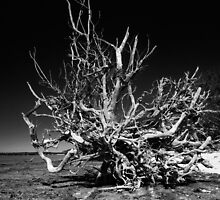 roots by james smith