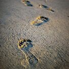 Footprints by Vulcan Spark Studios
