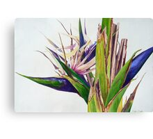 White Bird Of Paradise Tree Canvas Print