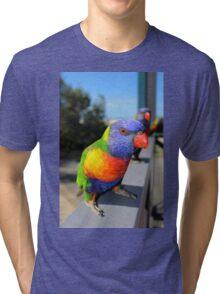 Rainbow Lorikeet Parrot Tri-blend T-Shirt