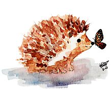 Hedgehog and Butterfly Kisses Photographic Print