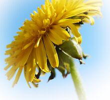 DANDELION AND BLUE SKY by Sandra  Aguirre