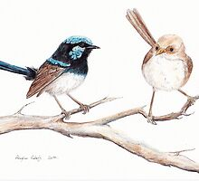 Superb Blue Wren Pair by Meaghan Roberts