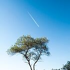 Lone tree, Jetstream & Moon by Glaspark
