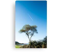 Lone tree, Jetstream & Moon Canvas Print