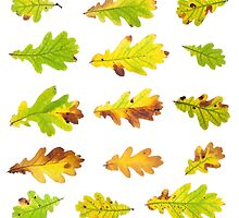 Oak Leaf Cluster by Christopher Cullen