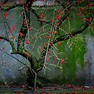 little red berries urban tree by Annemie Hiele