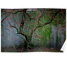 little red berries urban tree Poster