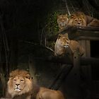 Barbary Lions by rosepetal2012