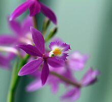 Flower Tenderness by Irina777