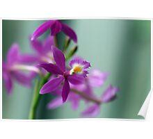 Flower Tenderness Poster