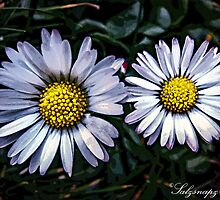 Pair of Daisies by salzsnapz