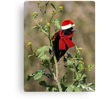 It's a Red-Winged Holiday Canvas Print