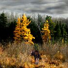 Three Larches and Two Moose by Wayne King