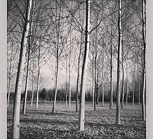 trees by claudioasile
