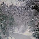 Jamestown Road by Marriet