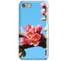 Tree blossom iPhone Case/Skin
