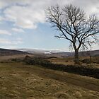 Geltsdale Tree. by Dave Staton