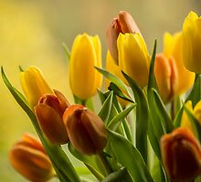 """St Clements"" Tulips by Judi Lion"