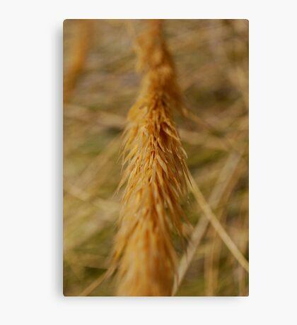 Corn Spike Canvas Print