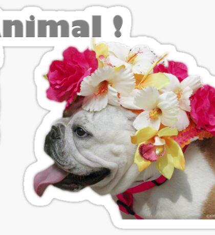 Party Animal!  Bulldog with Flower Bonnet Sticker