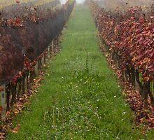 vineyard in the fog in autumn by spetenfia