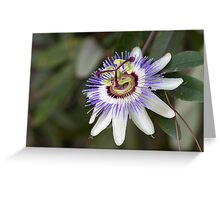 passionflower in the garden Greeting Card