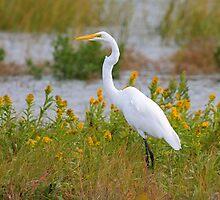 Egret in a Field of Flowers by LisaThomasPhoto