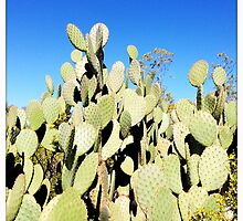 Prickly Pear Cactus I by Roger Passman