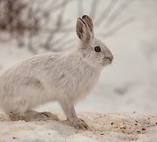 Winter Hare by Eunice Gibb