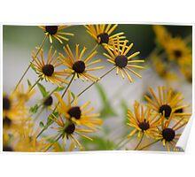 Kentucky Wild Flowers Poster
