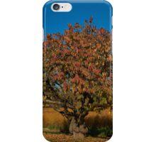 Gnarled fruit tree iPhone Case/Skin