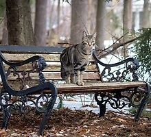 The Bench at the Edge of the Woods by Mikell Herrick