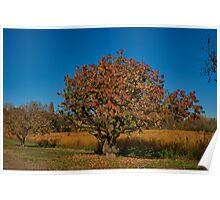 Gnarled fruit tree Poster
