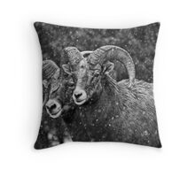 Bighorn Brothers in colorized grey Throw Pillow