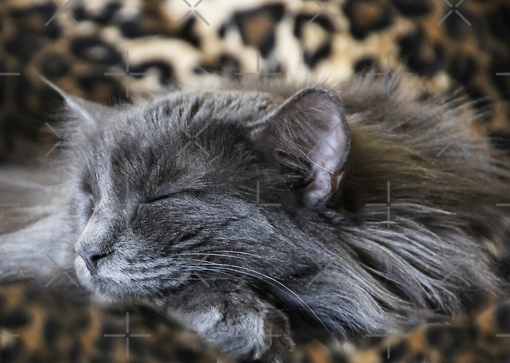Caught Cat Napping! by Heather Friedman