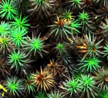 Rainforest Plant Sticker