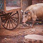 A pig on the street by Anna Alferova