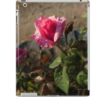 Spring Glow In Pink - a Sweetheart Rosebud With Dewdrops iPad Case/Skin
