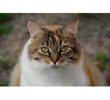 Pretty Fluffy Cat Photographic Print